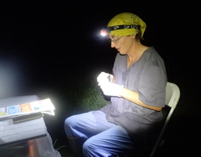 biologist banding bat