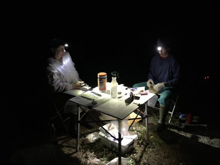 bat surveyors