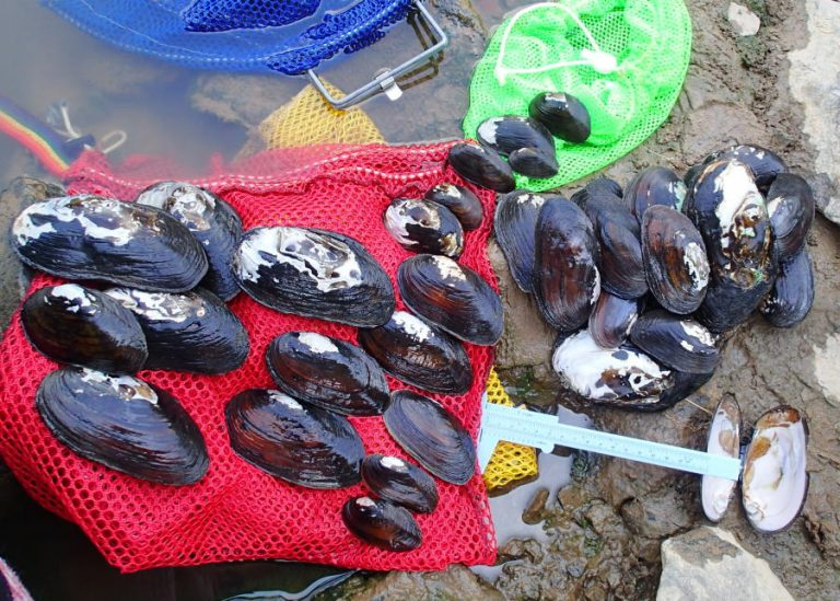 neuse river mussels