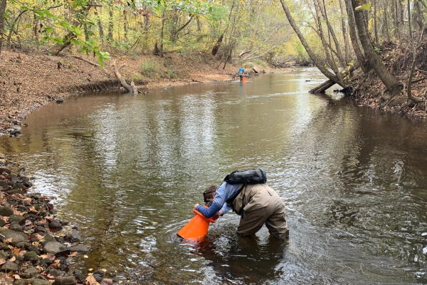 people in creek conducting aquatic survey