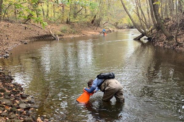 people in creek conducting aquatic survey