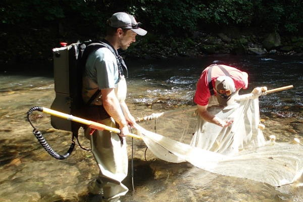 Freshwater Fish Survey North Fork French Broad River