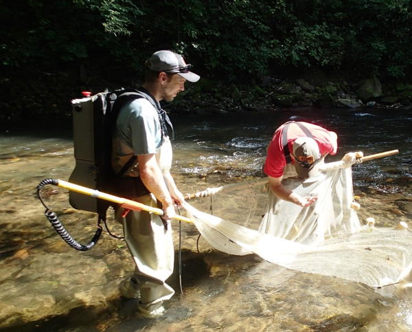 biologists conducting fish survey in North Fork French Broad River