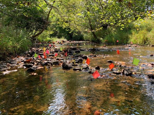 Johns Creek Mussel monitoring