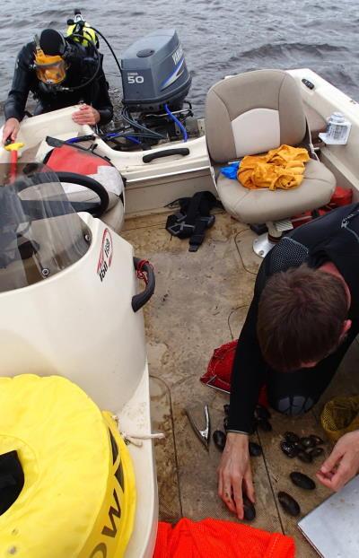 mussel dive survey