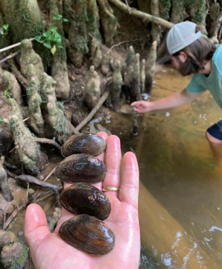 mussels in Turkey Creek, SC