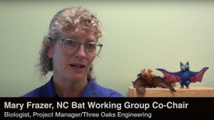 screenshot of youtube video Hooked on Bats