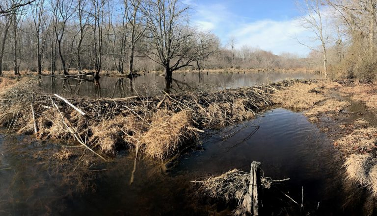 Little River wetland in Wake County