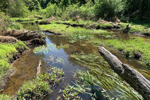Terrible Creek wetland in Wake County